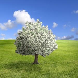 Money Coaching - Money Tree